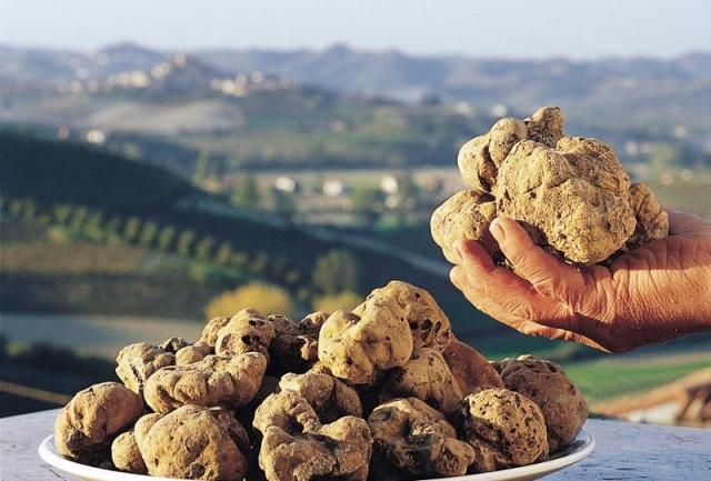 Италиански трюфели от Пиемонт